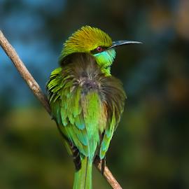 by Chandra Mouli Roy Chowdhury - Animals Birds