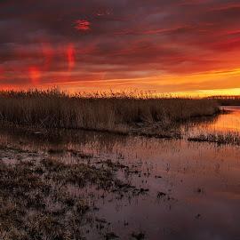 Winter Sunset by David Kiel - Landscapes Sunsets & Sunrises ( tidewater, chesapeake, md, sunset, point lookout )