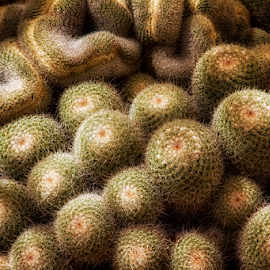 Cactus Swarm! by Fred Herring - Nature Up Close Other Natural Objects