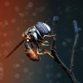 Lonely by Armi Sulthon Fauzi - Digital Art Animals