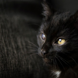 Not perfect by Cassandra G - Animals - Cats Kittens ( kitten, cat, animals, low key, black cat )