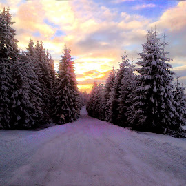 Winter road by Claudiu Petrisor - Instagram & Mobile Other ( winter, tree, sunset, snow, road )