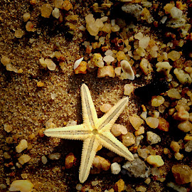 I saw a starfish on the beach by Janette Ho - Instagram & Mobile iPhone (  )