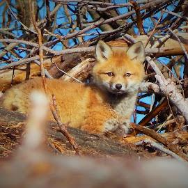 by Brandi Bernier - Animals Other Mammals