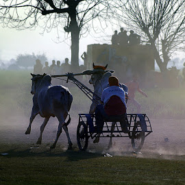 Beyond finish line #3 by Rakesh Syal - News & Events Sports ( animals, race, people,  )