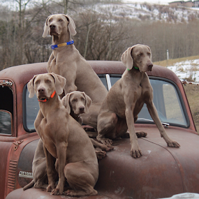Group Wait by Terry M - Animals - Dogs Portraits ( #GARYFONGPETS, #SHOWUSYOURPETS )