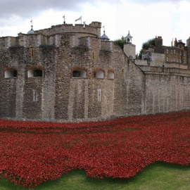 Every one - a lost soldier by Ceri Jones - Buildings & Architecture Public & Historical ( tower of london, london, one, poppy, world, war )