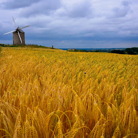 Corn field in Normandy by Travis Pambu - Landscapes Prairies, Meadows & Fields (  )