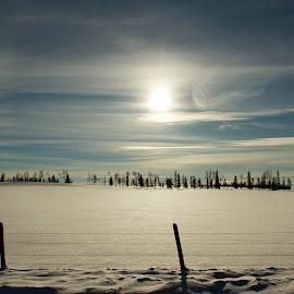 Late Afternoon by Barb Toews - Landscapes Prairies, Meadows & Fields ( field, winter, snow, meadow, treeline )