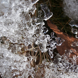Ice Lace by Jen Rhora - Nature Up Close Water ( water, lace, winter, ice, frozen,  )
