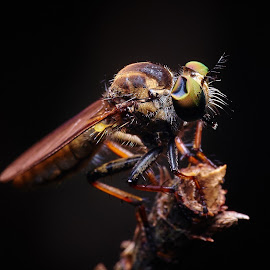 by Jimmy Alim - Novices Only Macro (  )