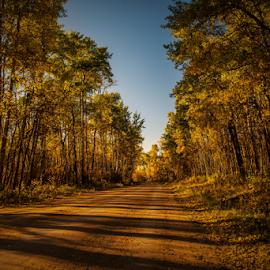 Elk Islandf City Park by Joseph Law - City,  Street & Park  City Parks ( blue sky, bushes, autumn is here, trees, elk island, shine upon, evening times, fall cvolor, city park )
