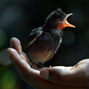 Save me by Ajay Halder - Animals Birds