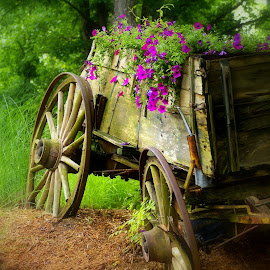 Lincoln Wagon (Color) by Steve Parsons - Artistic Objects Still Life ( wood, wheels, wagon, old wood, old west, covered wagon, rustic, flower planter, weathered, spokes, weathered wood, flowers, buckboard, spoked wheels )