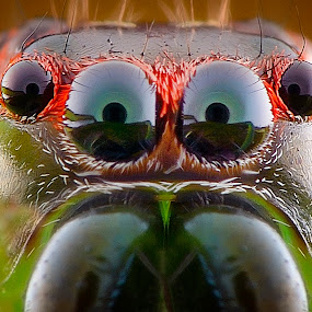 goggle by Rhonny Dayusasono - Animals Insects & Spiders ( #nature, #green, #macro, #spider )