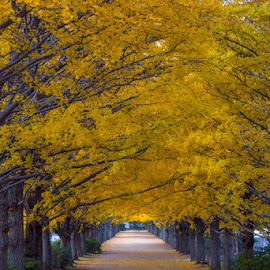December Hook Up by Deseree Joy Villanueva - City,  Street & Park  City Parks ( sony, nex, autumn, tachikawa, nex7, fall, tokyo, dheej18, dj villanueva, sonynex7, yellow, djvillanueva )