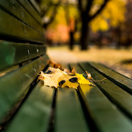 Benched leaves by Pierre Tessier - City,  Street & Park  City Parks ( fall colours, fall colors, autumn leaves, autumn, park bench,  )