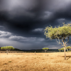 Before the thunderstorm by Rolf Crisovan - Landscapes Weather ( clouds, tree, thunderstorm, dark, cloudscape, landscape, tanzania )