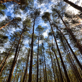 Standing Tall by Ray Rickaby - Nature Up Close Trees & Bushes ( vertical, national park, nature, trees, sunlight )