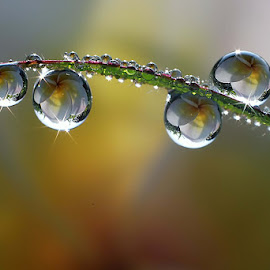 :: Cling :: by Dedy Haryanto - Nature Up Close Natural Waterdrops (  )