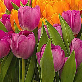Spring Tulips by Sue Matsunaga - Novices Only Flowers & Plants