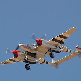 P-38 by William Stacy - Novices Only Sports ( ww2 planes, p-38, airplanes, airplane, planes )