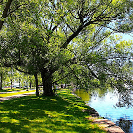 Tree by the River by Ronnie Caplan - City,  Street & Park  City Parks ( water, overhanging, reflection, park, pathway, tree, grass, bank, leaves, canal, shadows, branches )