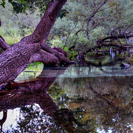 A tree touching water... by Stratos Lales - City,  Street & Park  City Parks ( water, park, tree, sunset, city )