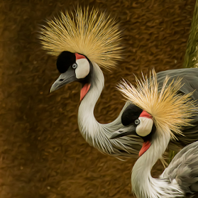 Grey Crowned Cranes  by Bill Tiepelman - Animals Other ( nature, zoo, spiky hair, wildlife, crane, animal )