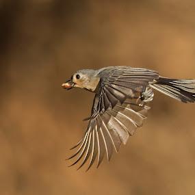 On The Run by Roy Walter - Animals Birds ( flight, animals, nature, wings, wildlife, titmouse, birds )