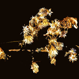A Bouquet of Dead Flowers by Stan Lupo - Digital Art Things ( macro, macrophotography, nature, digital art, plants, close-up photography, nature photography, nature up-close,  )