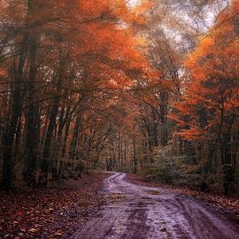Misty Day by Marcel Socaciu - Landscapes Forests ( autumn, forest, road, misty )