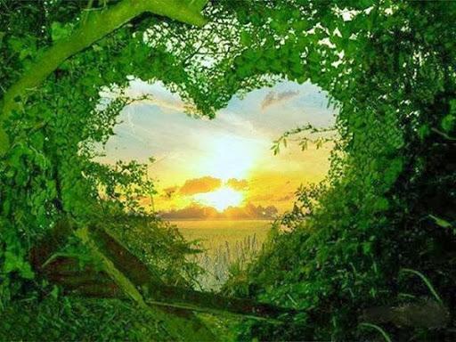 Сердце из зелени  № 1599015 бесплатно