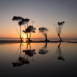 The Brothers Four by Matt Williams - Landscapes Sunsets & Sunrises ( water, starburst, sun rise, reflections, still, seascape, landscape, sun flare, coastline, coastal, sun, coast, mirror, mangroves, sunrise )