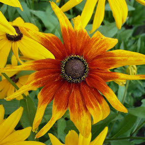 by Drago Ilisinovic - Novices Only Flowers & Plants (  )