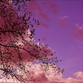 by Dragan Rakocevic - Nature Up Close Trees & Bushes