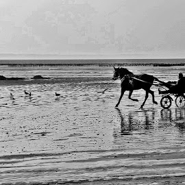Horse ride by Ciprian Apetrei - Transportation Other ( horse, cart, brittany, beach, transportation,  )