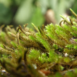 Moss by Ivan Ristić - Novices Only Macro ( macro, nature, green, moss, wet )