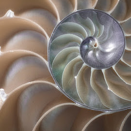 Spiral Pastel by Betsy Wilson - Nature Up Close Other Natural Objects ( pastel, shell, macro, seashell, spiral,  )