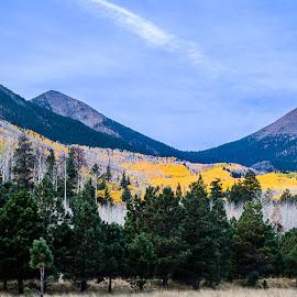 Lockett Meadow by Christina Heinle - Landscapes Prairies, Meadows & Fields ( dawn, fall colors, flagstaff, autumn, arizona, lockett meadow, aspens, sunrise, united states )