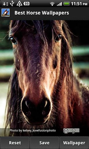 Best Horse Wallpapers