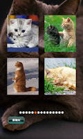 Screenshot of Cat Puzzles