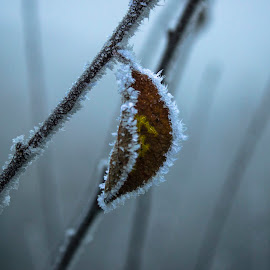 frosty by John Palmer - Landscapes Prairies, Meadows & Fields ( winter, frost, leaf, frozen, landscape )