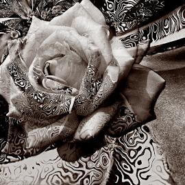 SHADOW by Carmen Velcic - Digital Art Abstract ( abstract, pattern, roses, dark, flowers, digital )