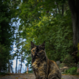 Deamon by Ronalds Sirba - Animals - Cats Portraits ( cats, cat, autumn, color, cute )
