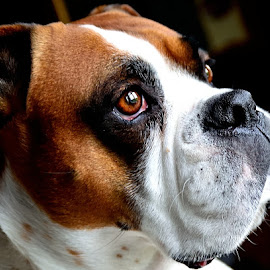 by Anna Birch - Animals - Dogs Portraits ( #GARYFONGPETS, #SHOWUSYOURPETS,  )