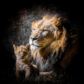 Portraits of the Pride 10 by Gregg Pratt - Animals Lions, Tigers & Big Cats ( lion )