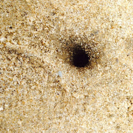 Hermit crab home by Kelli Kirshtein - Nature Up Close Sand
