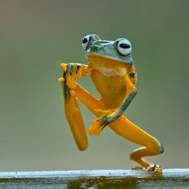 by Yohana Waty - Animals Amphibians