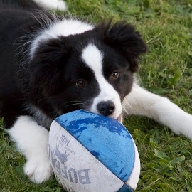Dash the Footy Puppy by Julia Goh - Animals - Dogs Playing